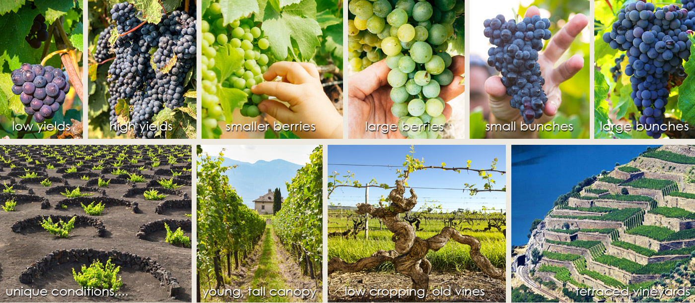 Cropping-Levels-Image-01